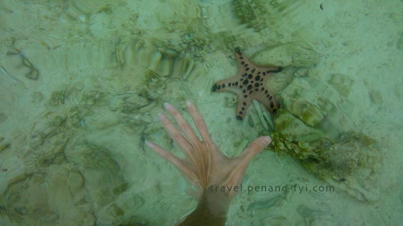 boracay-starfish