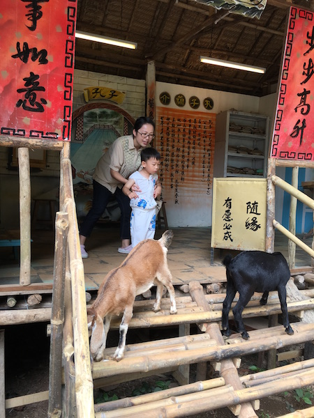 Qing-Xin-Ling-Leisure-Cultural-Village-goats