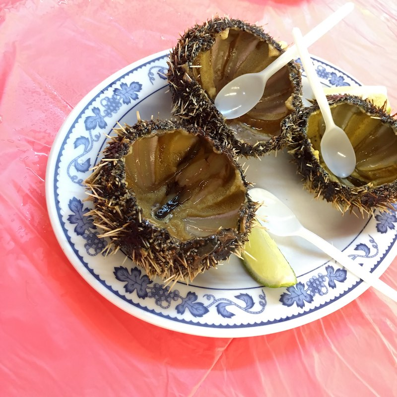 kenting-sea-urchin-2