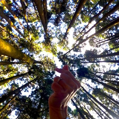 trees-love
