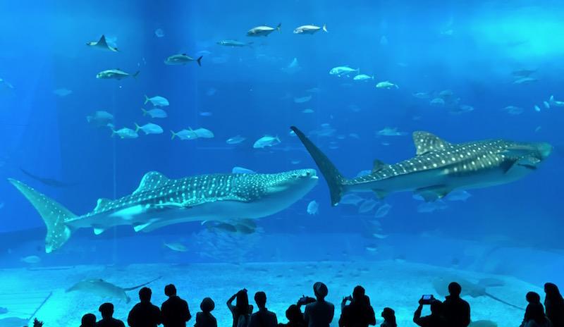 churaumi-aquarium