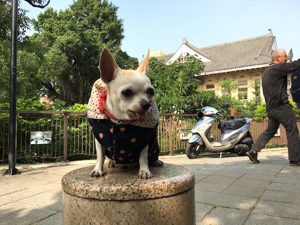 tainan-dog
