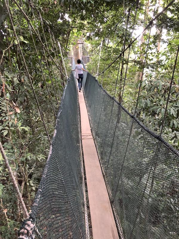 poring-canopy-walk