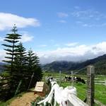 sabah-desa-dairy-farm-black-and-white-cows