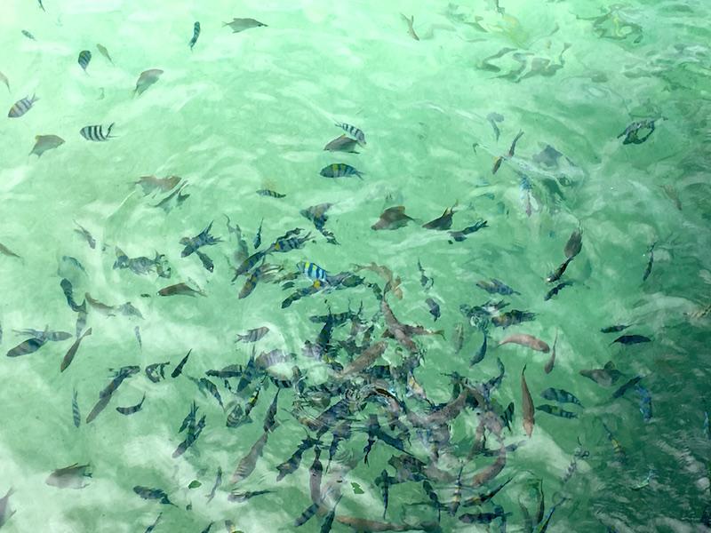 sapi-island-clear-water-fishes