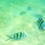 snorkelling-sapi-island-sabah