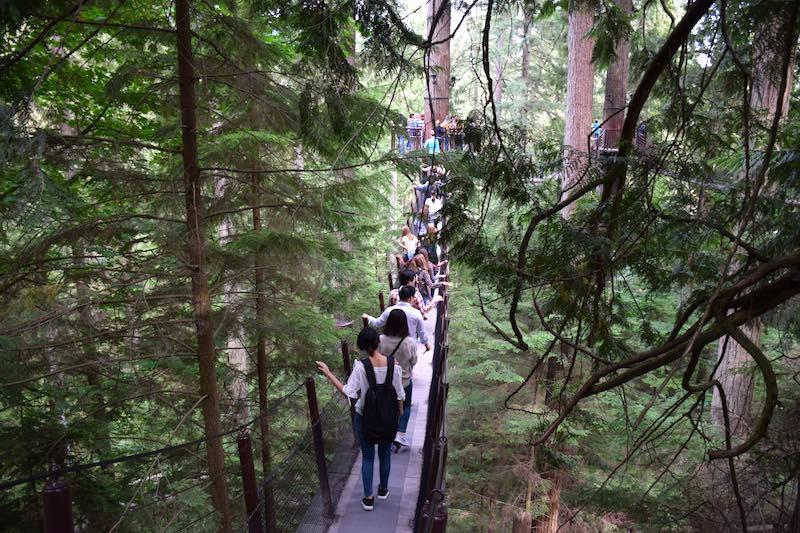Capilano Treetops Adventure