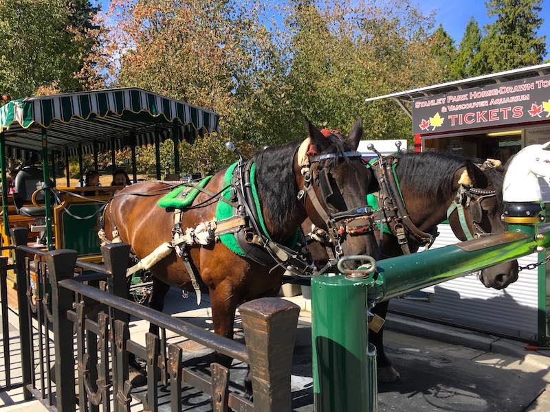 drawn-horse-tour-vancouver