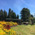 stanley-park-drawn-horse-tour